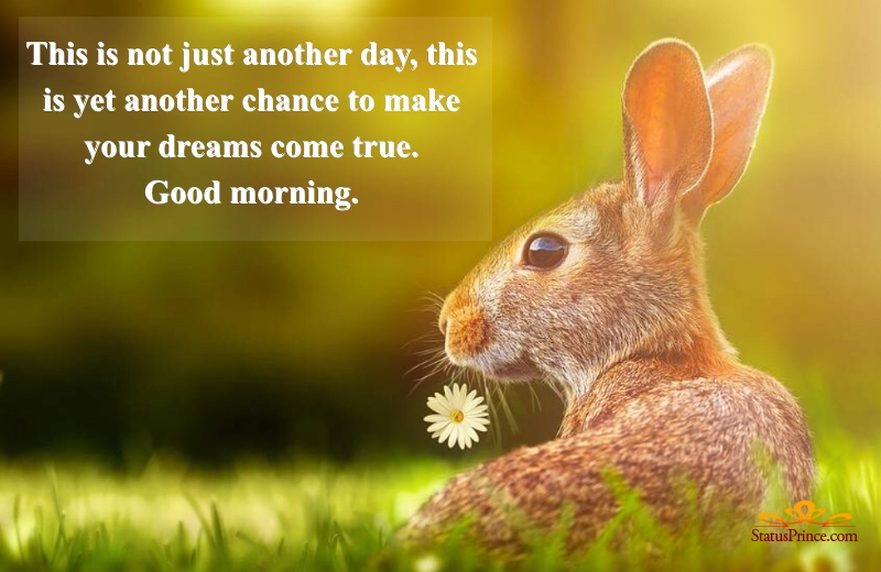 good morning amazing wallpapers