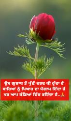 New Punjabi Motivational Status
